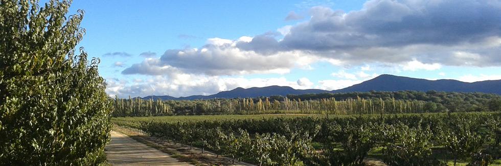 collioure_wijn